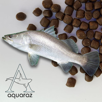 Aquaraz-List-Feed-Barramundi-Pic