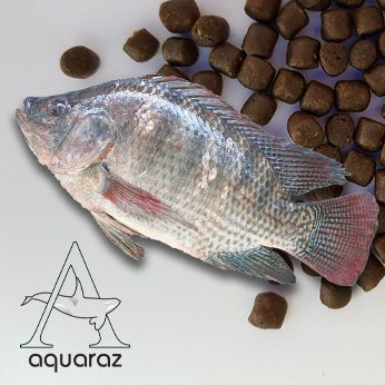 Aquaraz-List-Feed-Tilapia-Pic